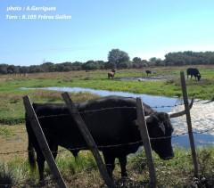 toro,gallon,portugaise,2013